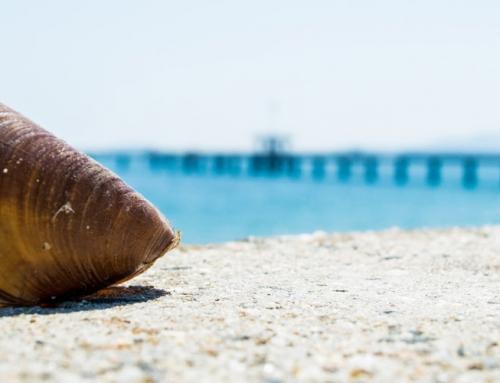 11 предложения за почивка на море в България