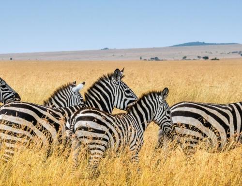 Полети до Кения (Найроби) за само 448 Евро