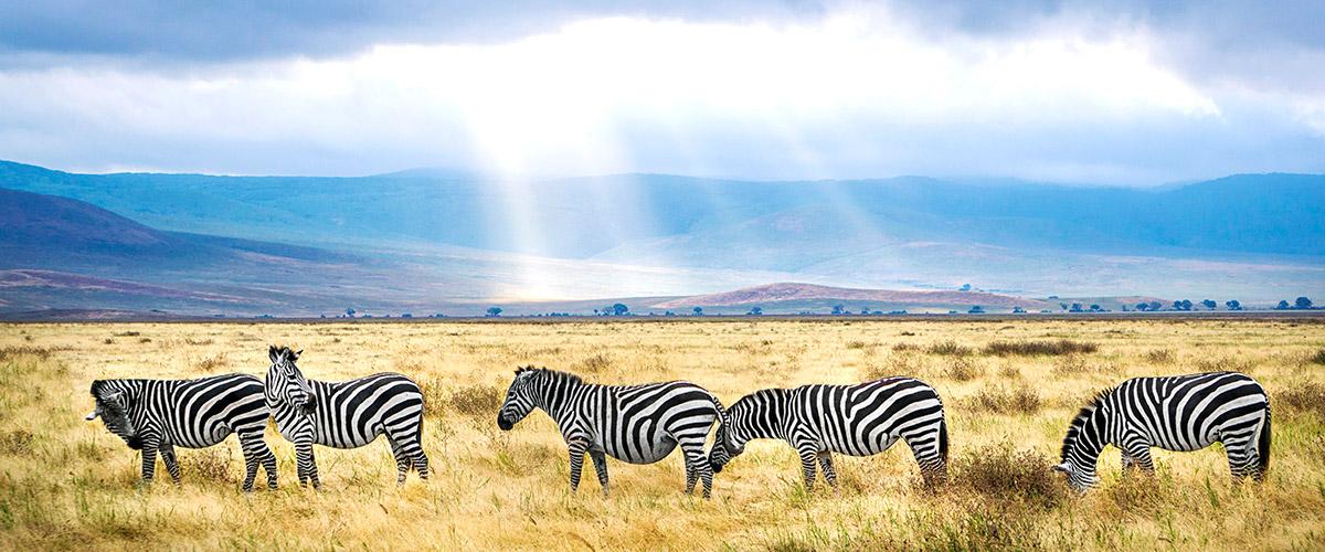 Полети до Танзания