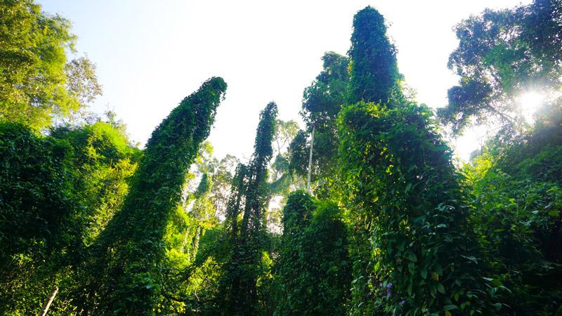 9-дой-сутеп-джунгла